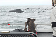 Dog watching a whale on Monterey Bay Whale Watch trip