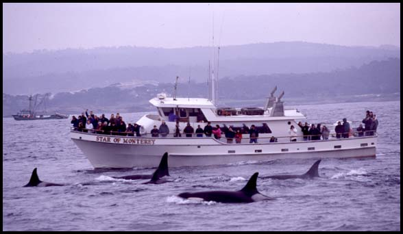 Killer Whales and Whale Watching Boat, Slide No. T0108