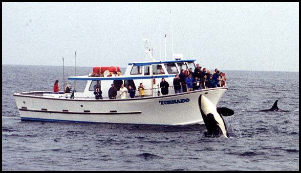 Killer Whales, Slide No. W01-19