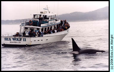 Sea Wolf II and Killer Whale photo by Esta Lee Albright