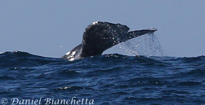 12-hour Full Day whale watching trips
