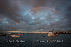 Rainbow at Sunset over the marina, photo by Daniel Bianchetta