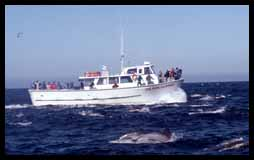 Charter whale watching cruise