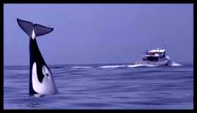 Killer Whale and Pt. Sur Clipper, photo by Nancy Black
